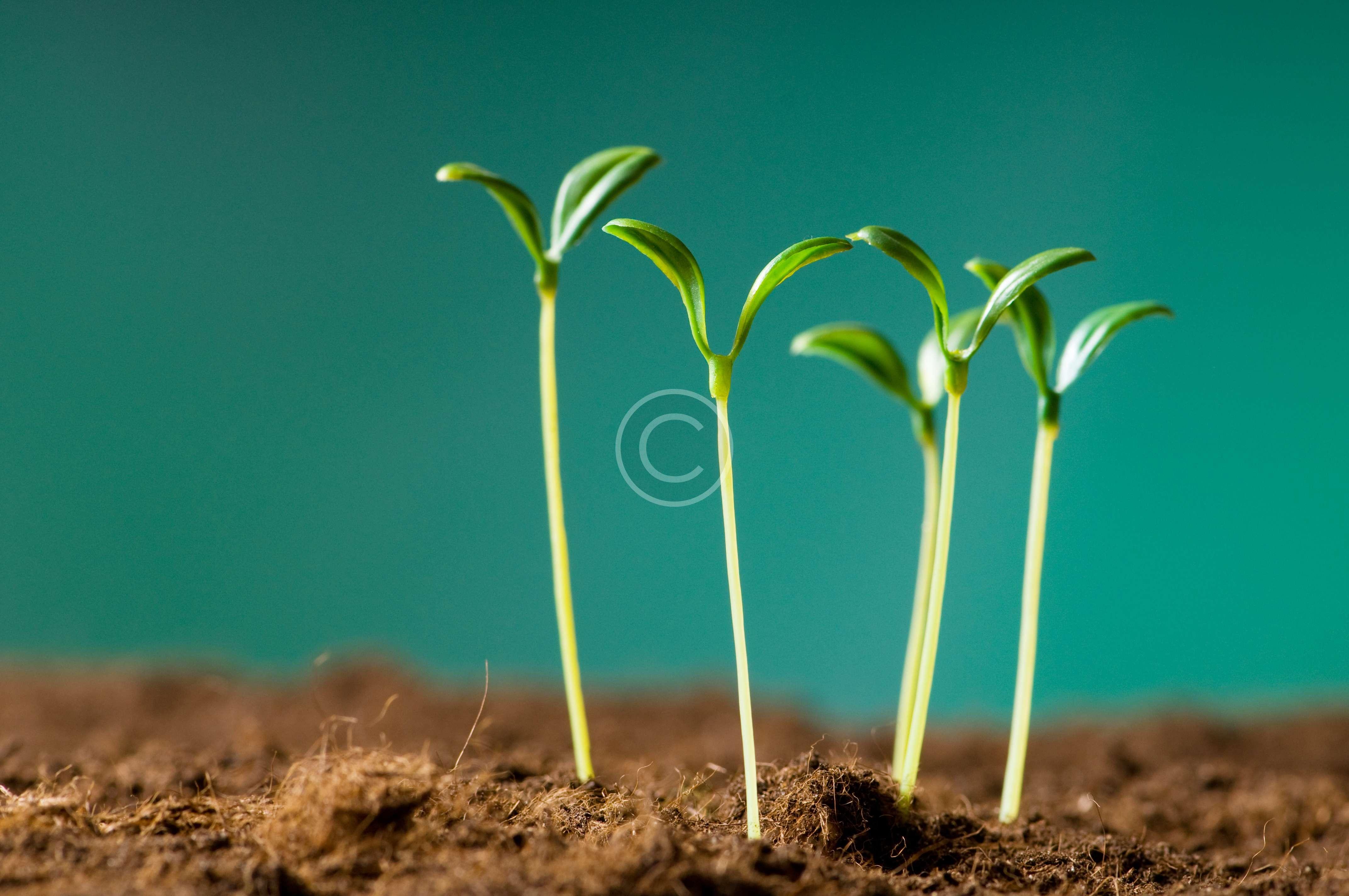 bigstock-Green-seedling-illustrating-co-14319230